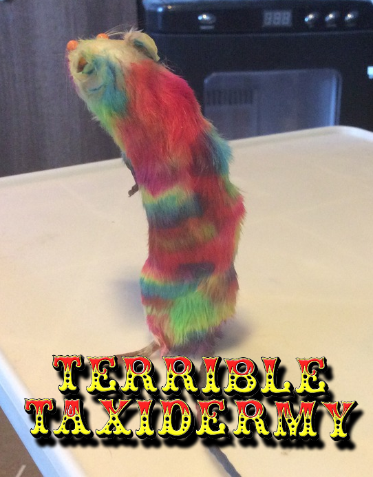 Colour Explosion! Terrible Taxidermy