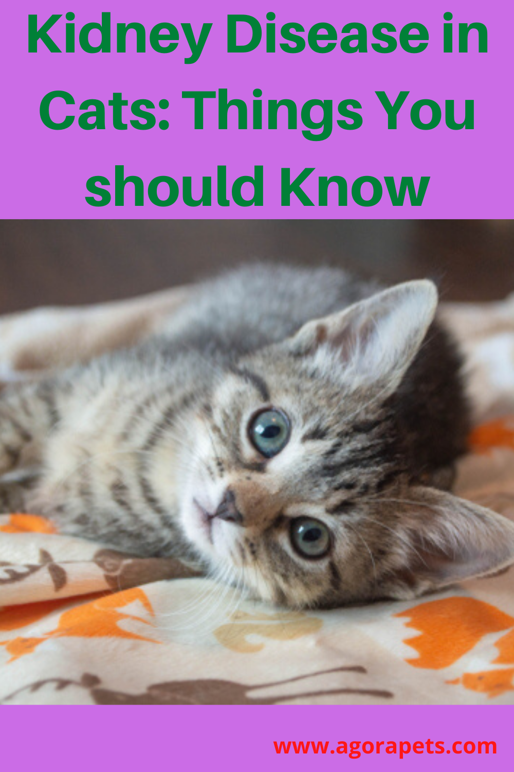 Kidney Disease In Cats Things You Should Know In 2020 Kidney Disease Cats Cat Kidney