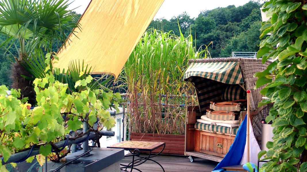 Sichtschutz auf dem Balkon durch Pflanzen Rankende