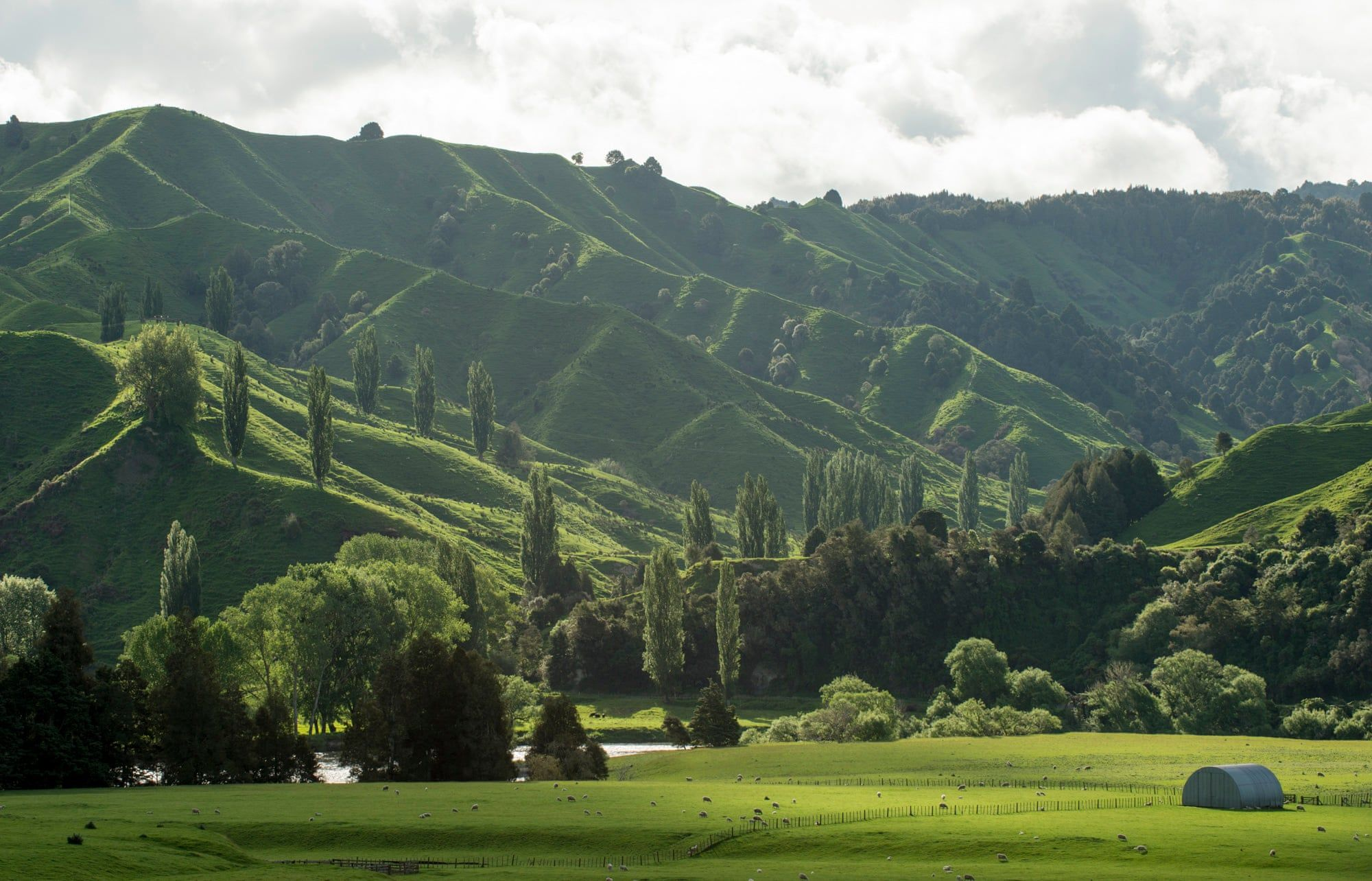 New Zealand S Whanganui River In Pictures River New Zealand River Queen