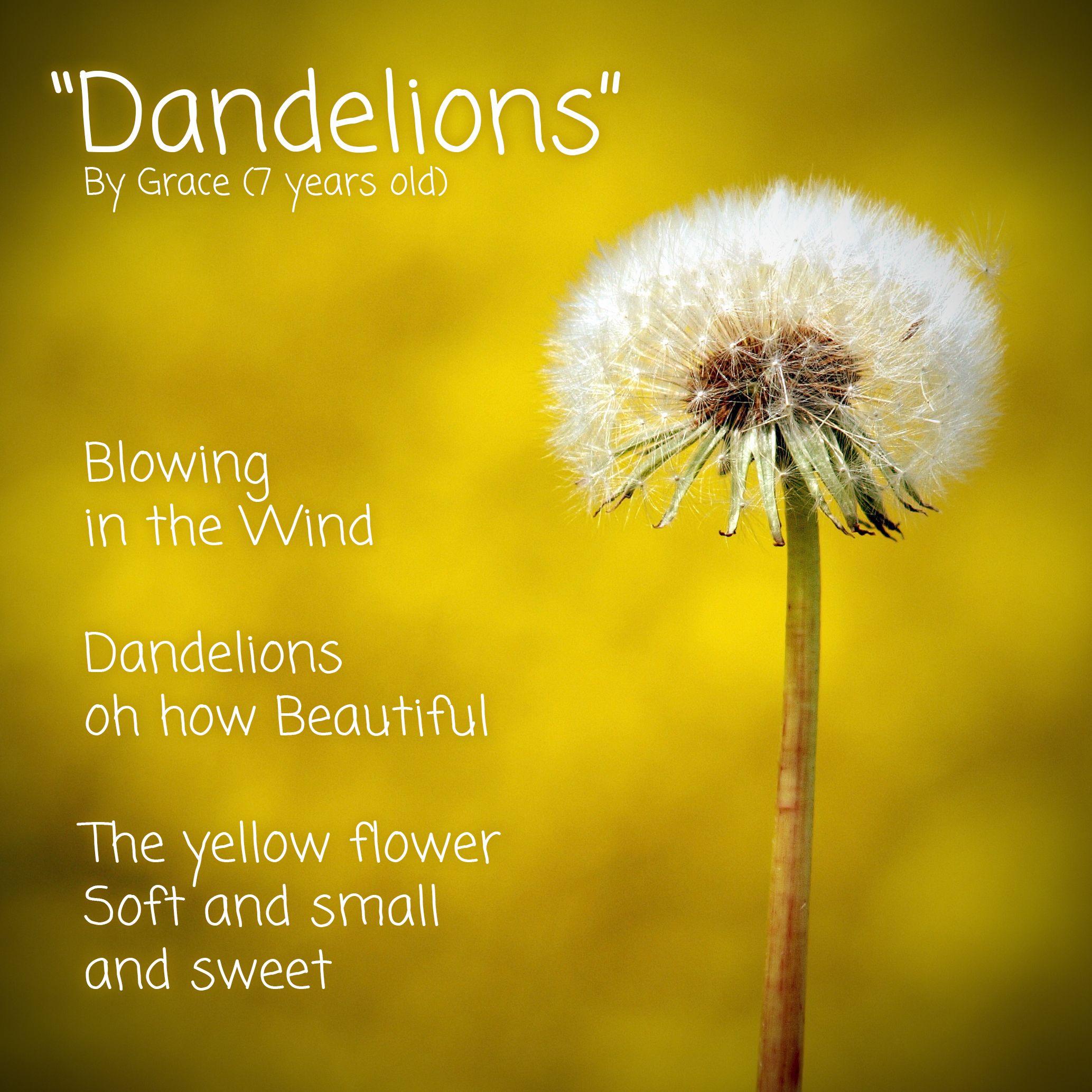 Dandelion Plant Dandelion Flowers Plants Botany Gardening Pronunciation Phonetics Phonology Vocabulary Englishvocab In 2020 Plants Dandelion Plant Dandelion
