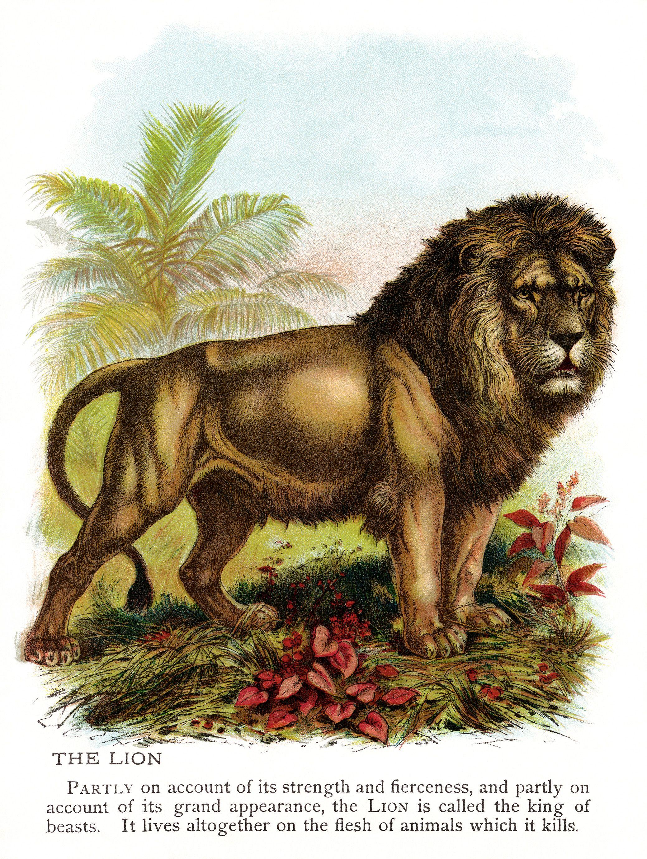 Vintage Lion Clip Art Illustration Animal Printable
