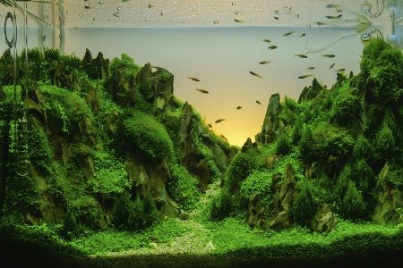 Low-maintenance Plants   Fish tank plants, Aquarium ...