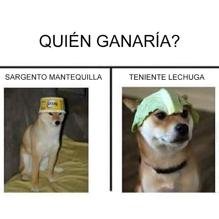 Pin By Dante Orellana On Humor Y Muchos Memes Memes Animal Memes Funny Memes
