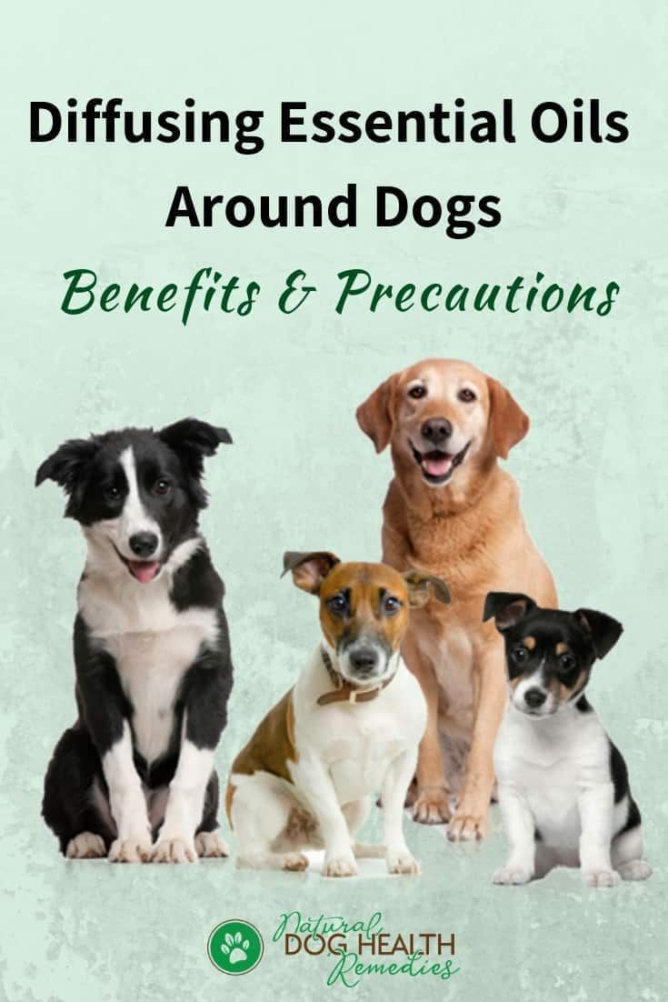 Learn how to diffu se essential oils safely around dogs