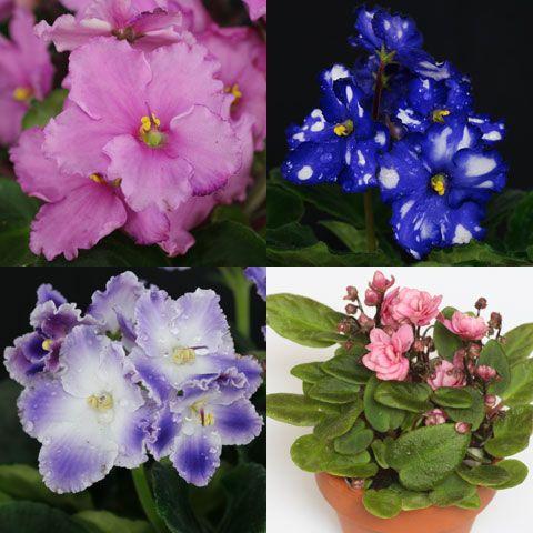 Blau blühende Pflanzen und Blumen bestimmen | Illustration botanique ...