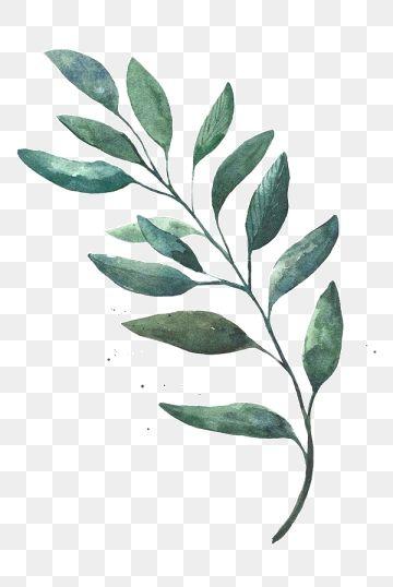 Watercolor Leaves Watercolor Clipart Leaf Green Leaf Png And Vector With Transparent Background For Free Download Ilustracao De Aquarela Ilustracoes Florais Folhas De Aquarela