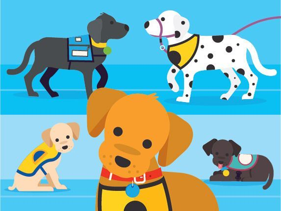 Training Service Dogs From Puppy to Invaluable Partner