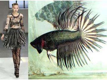 Rodarte inspired fighting Fish Fashion