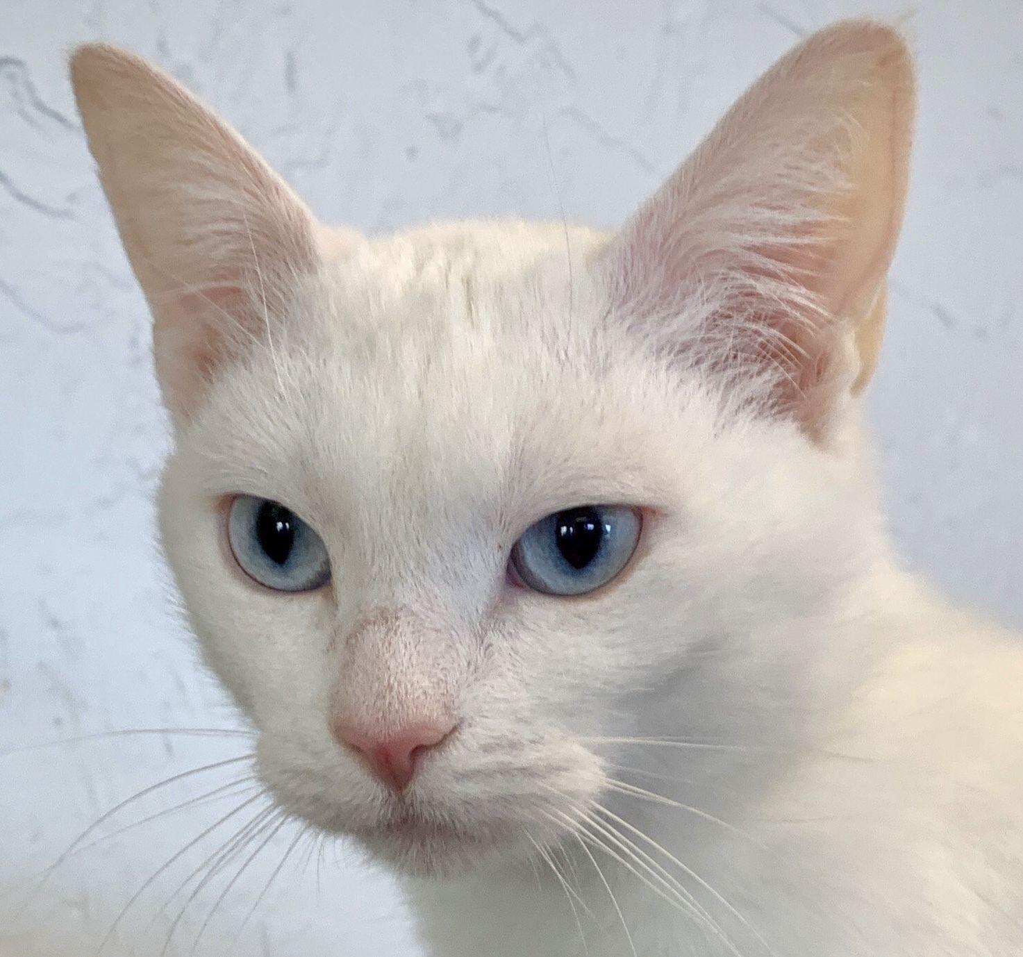 Adopt Bunny On Cat Adoption Help Homeless Pets Pet Adoption