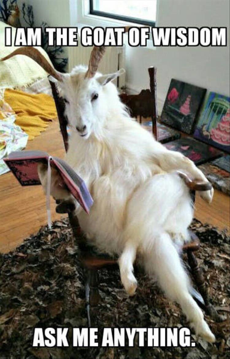 Goat Of Wisdom Funny Goat Memes Cute Funny Animals Funny Animal Memes