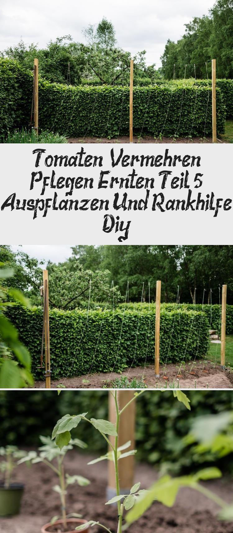 Tomaten Vermehren Pflegen Ernten Teil 5 Auspflanzen Und Rankhilfe Diy In 2020 Garten Herbs Plants