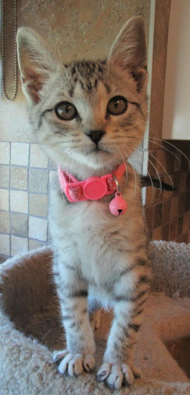 Adopt Mason on Adoptable Pets Board Animals, Cute cats