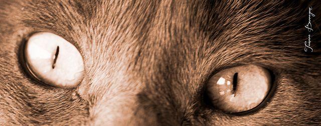 """""""Mirada Felina - Lilith"""" - Agosto 2013 [macro/retrato] #retrato #portraits #gatos #cats #kitten #eyes #ojos #miradas"""