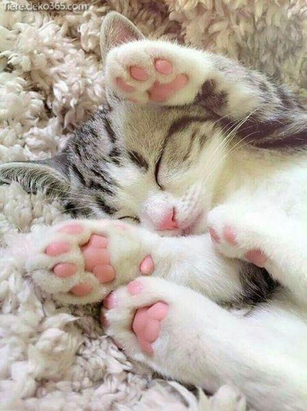 Photo of Buenos consejos para cortar fácilmente las uñas de tu gato