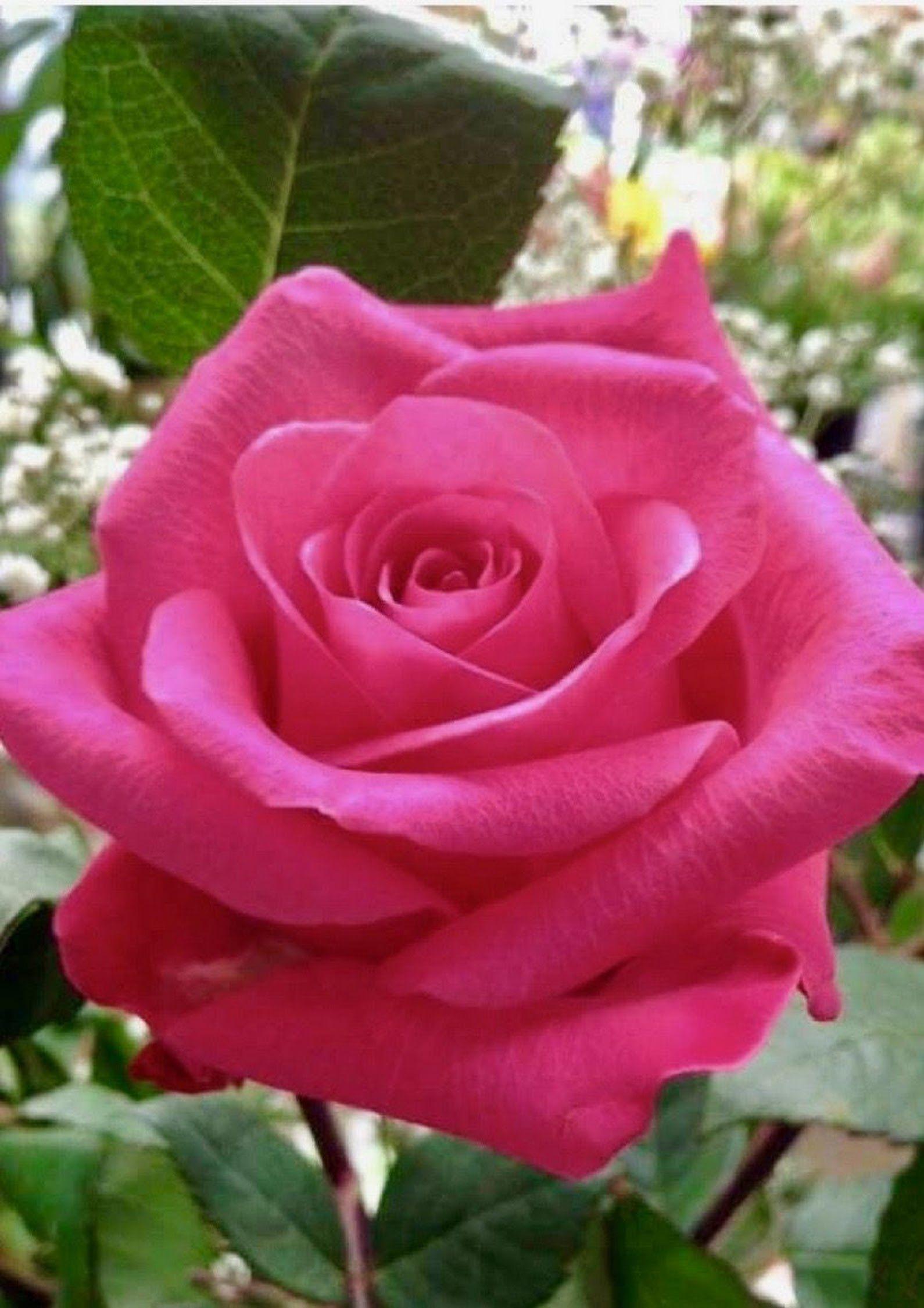 Agababy Juggler Jongleur Acrobat Dancer Beautiful roses