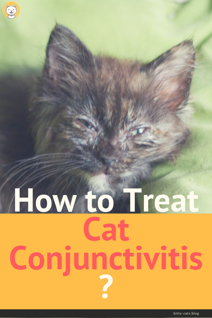 How to Treat Cat Conjunctivitis Cat eye infection