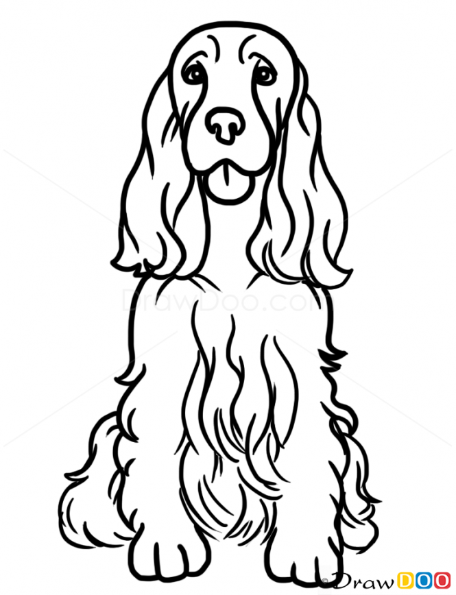 How to draw cocker spaniel dogs and puppies kopek - Dessin de cocker ...