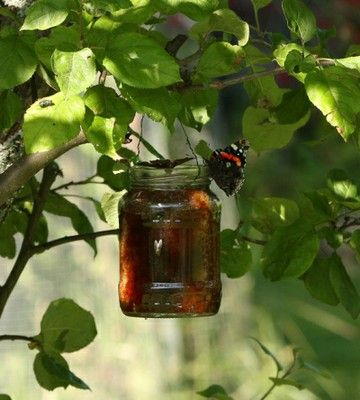 Perusta perhosbaari ja houkuttele lepattavia kaunokaisia. Tämä on tehty punaviinistä ja hunajasta tai fariinisokerista.   Mix a seducing drink for the butterflies in your garden! Butterfly cocktail contains red wine + honey, treacle or brown sugar.