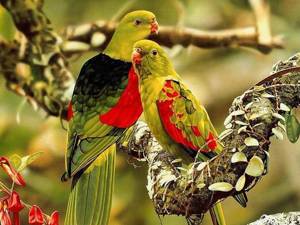 Birds Catch Best Bird Wallpaper HD download birds wallpaper