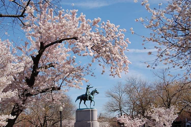 How To Ring In Cherry Blossom Season Cherry Blossom Festival Cherry Blossom Season Cherry Blossom