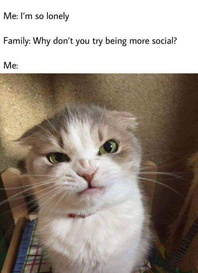 Treat Yourself With Some Funny Cat Memes Funny Animal Memes Funny Animal Jokes Funny Cat Memes