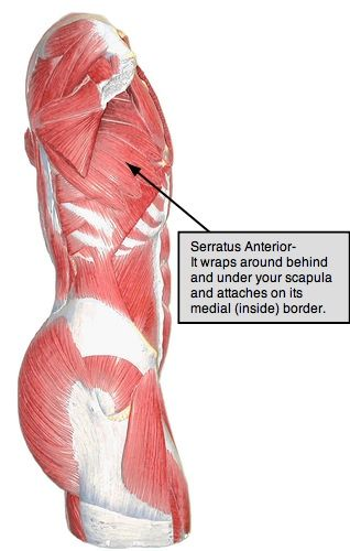how to get rid of anterior deltoid fat