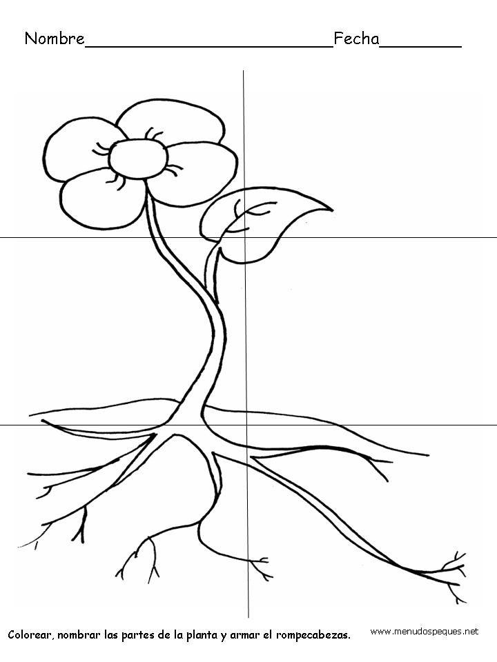 Resultado De Imagen Para Actividades Para Primer Grado Ciencias Naturales Seres Vivos Partes De La Planta Partes De La Misa Fichas