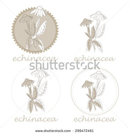 vector illustration of echinacea flower and leaves. various types of labels. - stock vector
