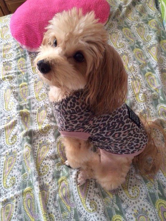 プードル×パピヨンの女の子が可愛く着てくれました(*^^*)背中には大きなタグを縫い付けてあります。|ハンドメイド、手作り、手仕事品の通販・販売・購入ならCreema。