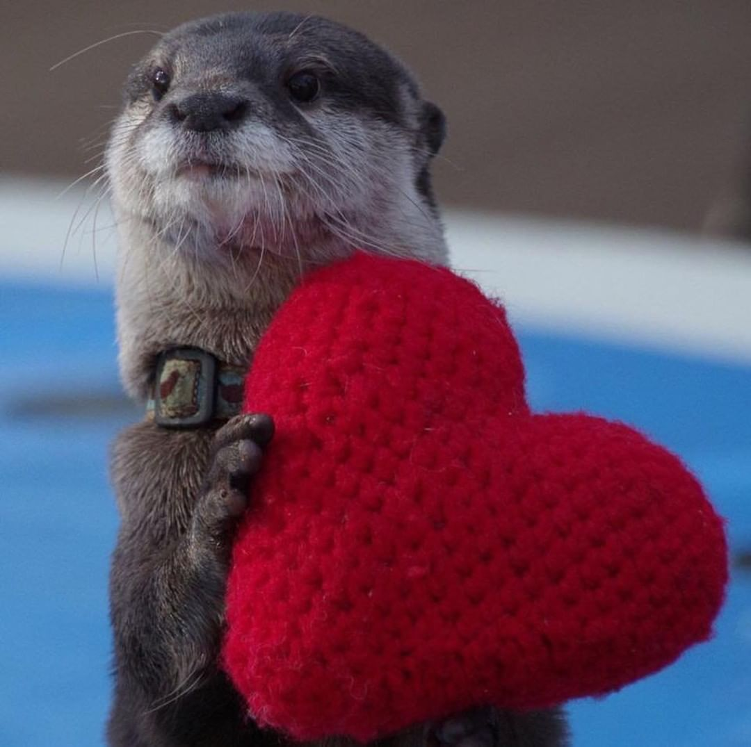Hey You Yes You Be Happy Smile This Otter Loves You