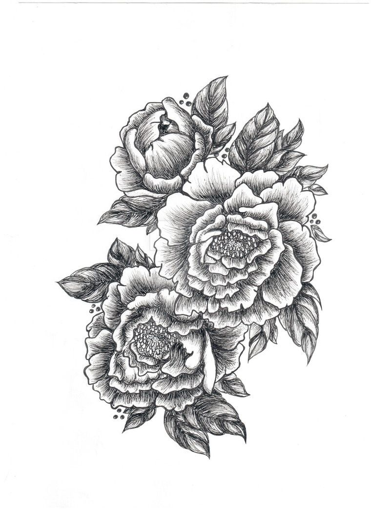 peony drawing google search drawings pinterest peony drawing peony and google search. Black Bedroom Furniture Sets. Home Design Ideas