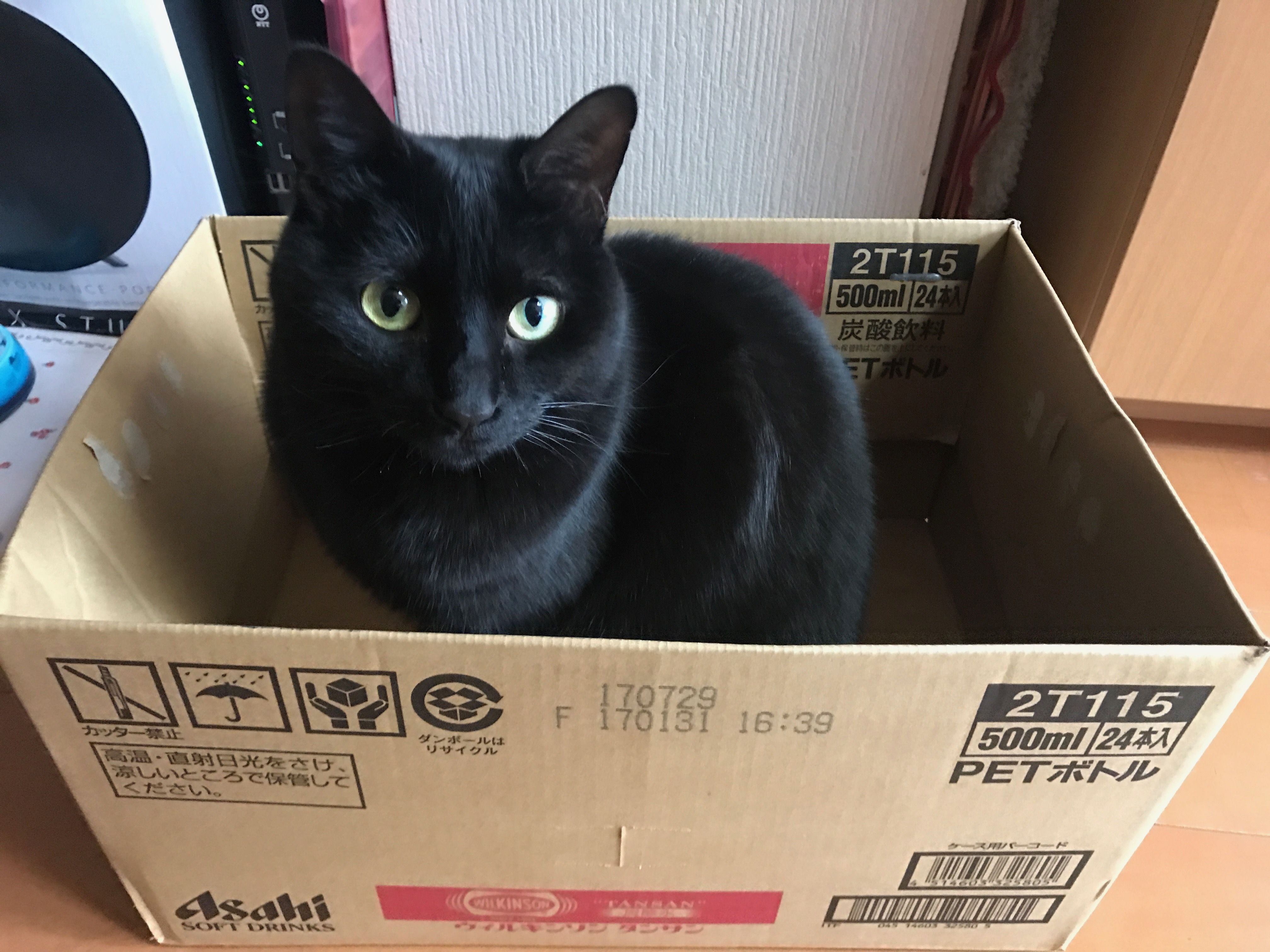 Cat Shopping For A New Box Trying It Out For Size Comfort Will It Suit Cats And Kittens Crazy Cats Cats