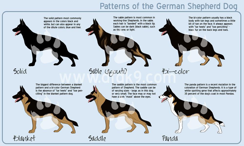 Shepherd Patterns Small Png German Shepherd Colors German Shepherd Husky Mix German Shepherd