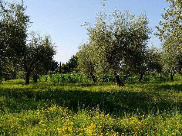 Einen Olivenbaum Umtopfen So Macht Ihr Es Richtig Olivenbaum Baum Und Olivenbaum Pflege