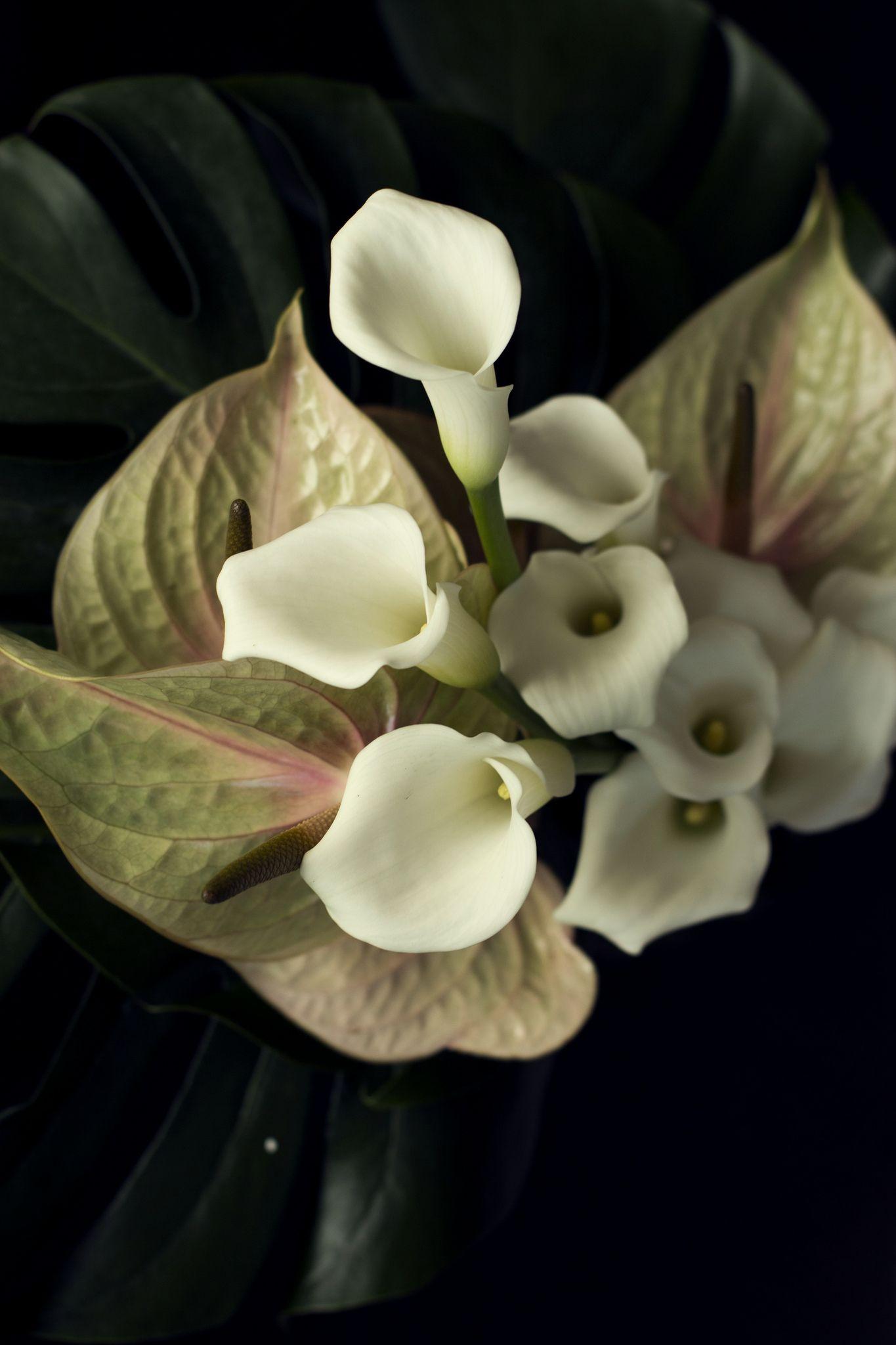 Calla lily calla lilies izmirmasajfo