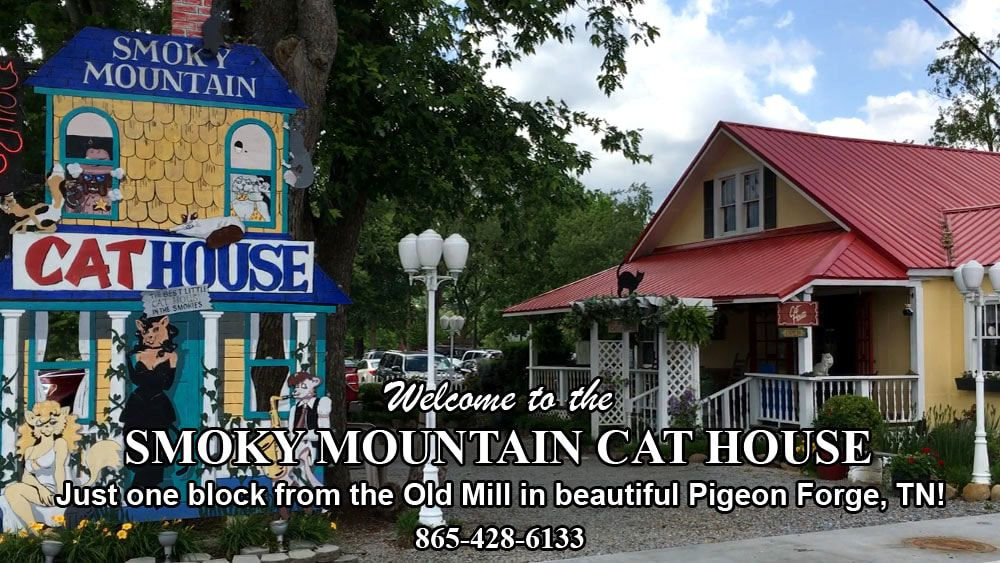 Smoky Mountain Cat House Located In Pigeon Forge Tn Is