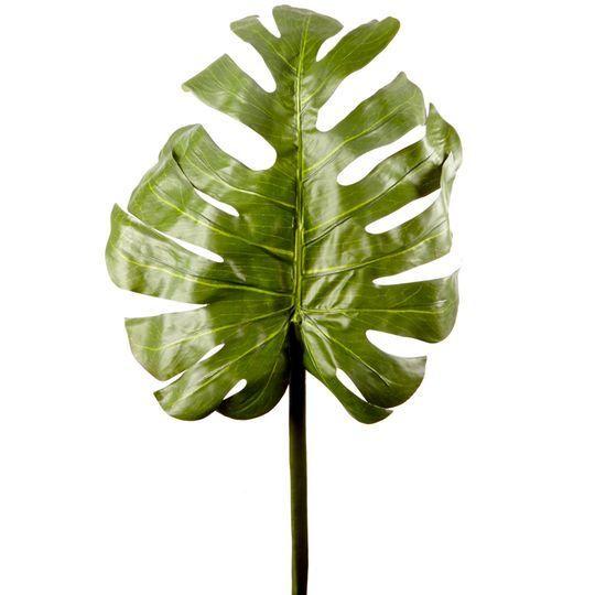 Split Leafed Philodendron Stem