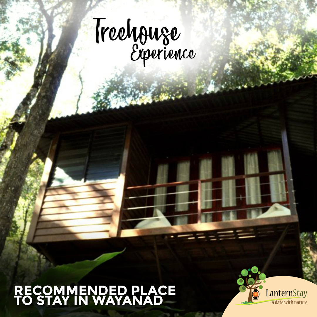 Tree house is an adventurous and exhilarating way to rejuvenate yourself to get a stressed-free life.  #treehouse #treehousehotel #treehousebed #treehouseresort #treehousevillas #treehousedesign #release #stress #dinner #nature #holiday #travel #photography #forest #exoticbirding #wildlifephotography #naturephotography #trip #resort #wayanad #kerala #lanternstay