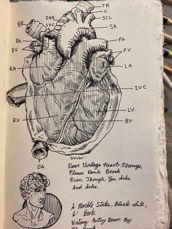 Love drawing vintage anatomy diagrams