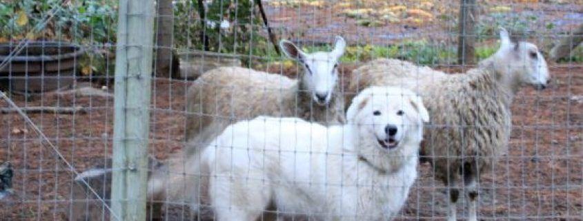 11+ Jackson county animal shelter oregon ideas