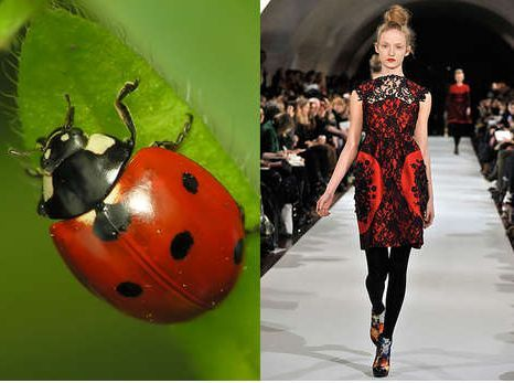 Ladybug Inspired Fashion Fashion Outfits Erdem Moralioglu