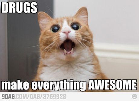 Drug cat ;D