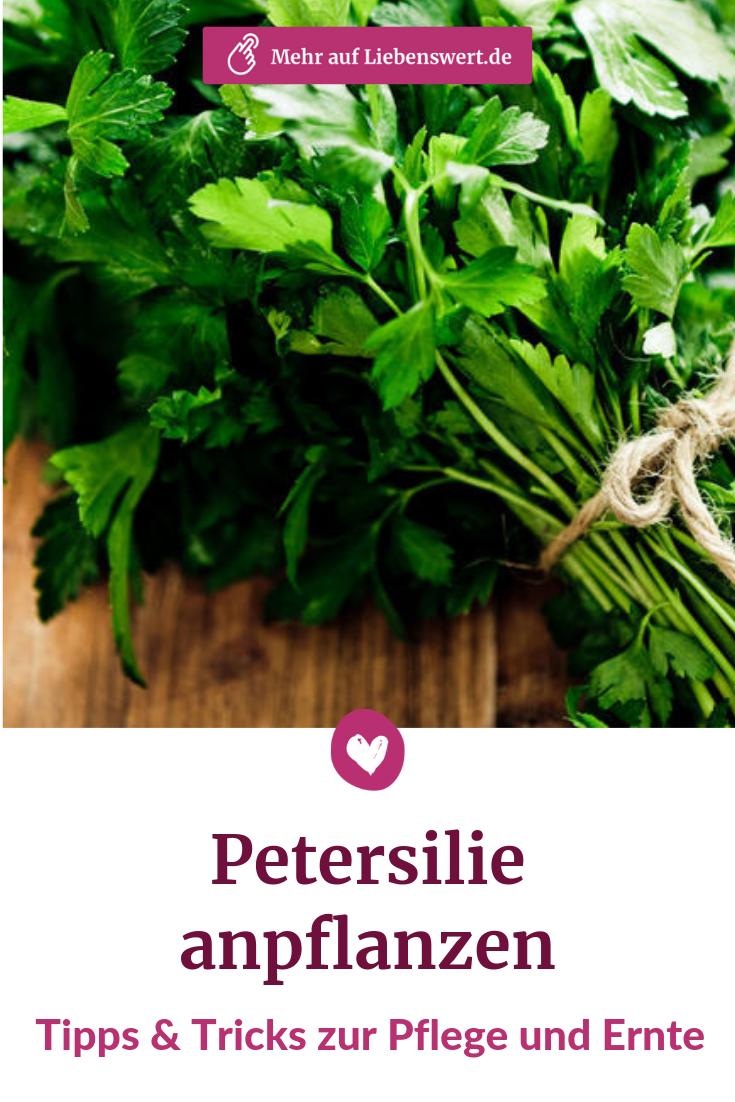 Petersilie Anpflanzen Pflegen Ernten Petersilie Petersilie Pflanzen Pflanzen