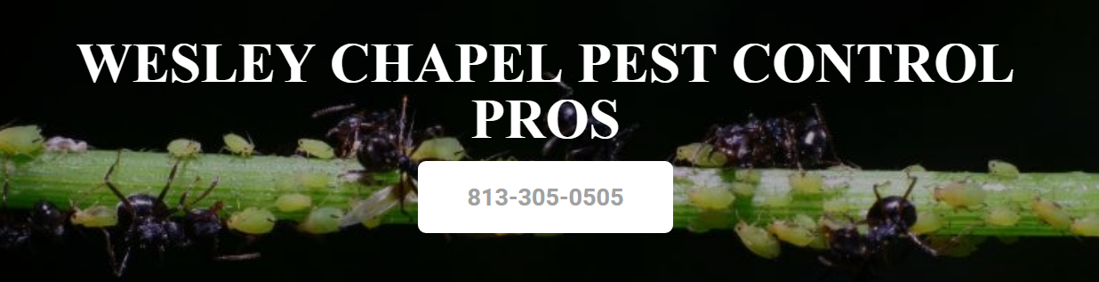 Pest Control Wesley Chapel Pest Control Company 813