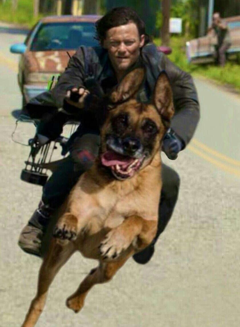 Daryl dixon rides dog walking dead funny the walking