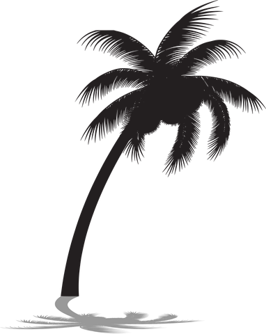 Free Image On Pixabay Palm Tree Silhouette Palm Tree Palm Tree Silhouette Tree Silhouette Nature Images