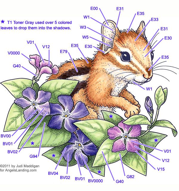 Chipmunk Copic coloring guide by Judi Maddigan  on Angels Landing
