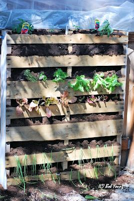 The Pallet Garden I Made Today, 28 April. Tomatoes, Lettuce, Onions, Leeks  And Herbs.