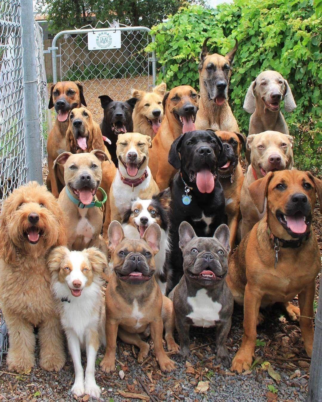 Pin Von Christina Bauer Auf Dogs Other Canines Tiere